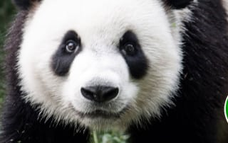 Google Panda Update - The Nuzzledot Blog