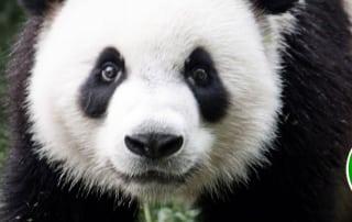 Google Panda Update - The Nuzzledot Blog